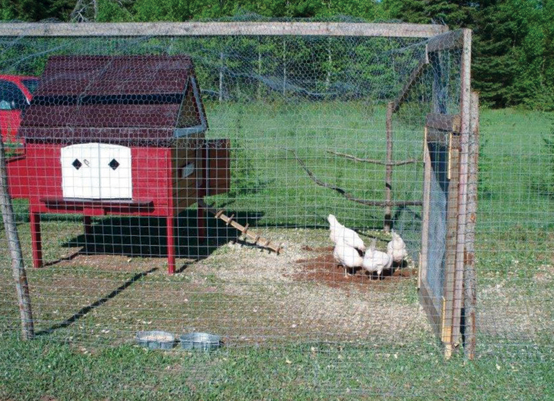 Outdoor run for chickens